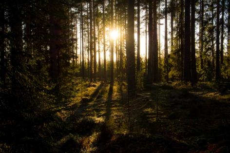 Bergslagsskogen