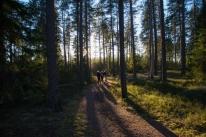 Fagersta-skogen