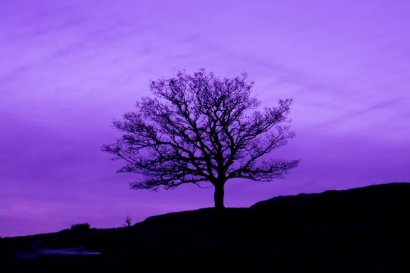 Träd i kvällsljus
