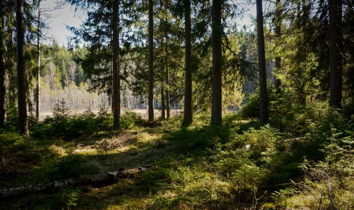 Levande skog