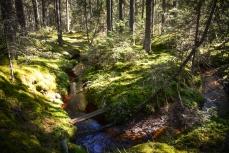 I Riddarhytteskogen