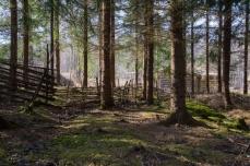 Skogen vid Lapphyttan