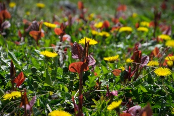 Blommor och blad