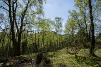 Skog i Dansen