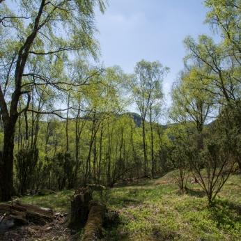 Skog vid Dansen