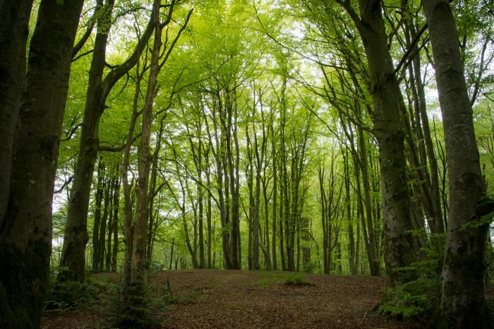Skogen vid Mosvatnet