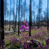 Hälleskogsbrännan i Västmanland