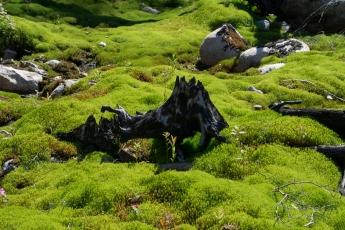 Grön mossa 1