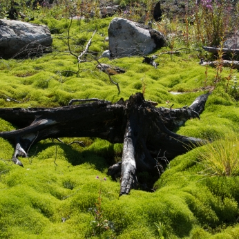 Grön mossa 2