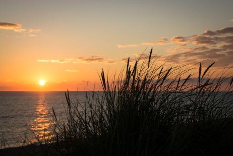 Strandgräs i solnedgång