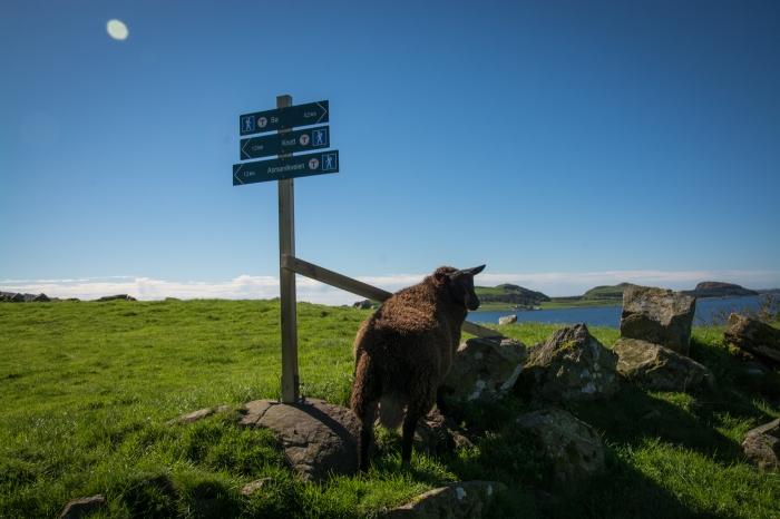 Utsikt för får