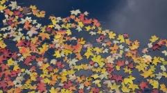 Stjärnhimmel av löv
