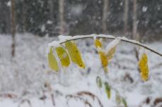 Höst och snö