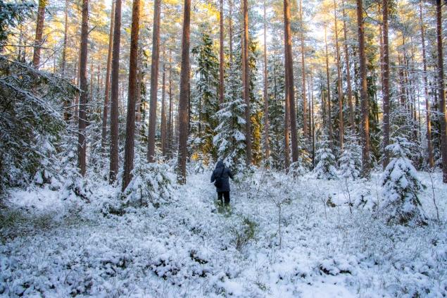 En tomte i skogen