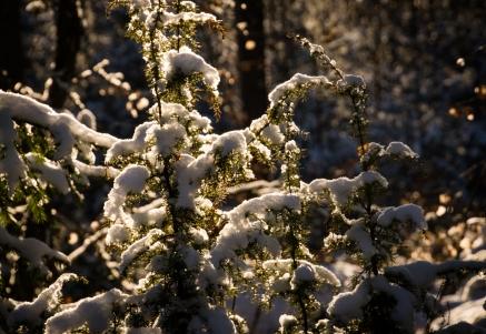 Sol och snö