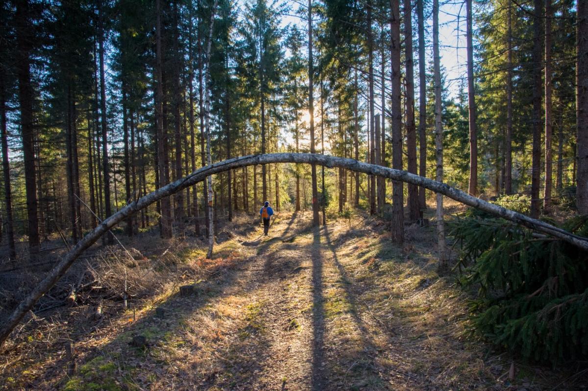 Ryssvägen i Norn
