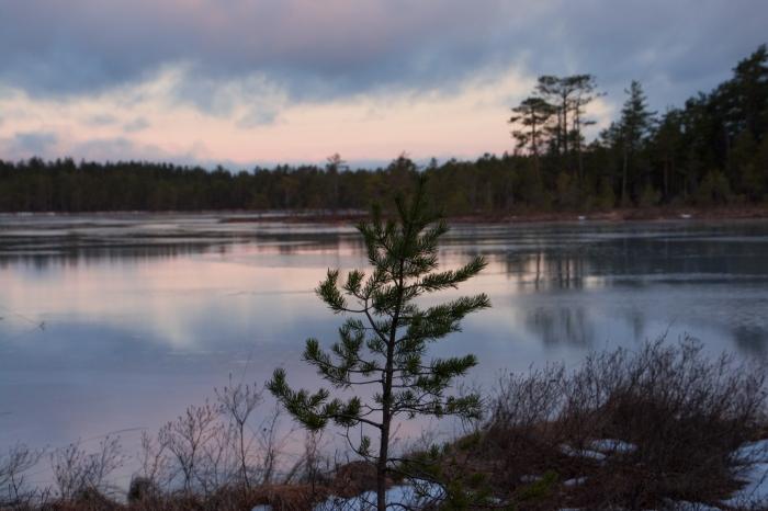 Morgon i Lappland