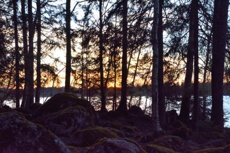 Skog och sjö
