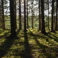 Skogen i vårskrud