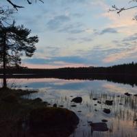 Grönska, vildmark och event