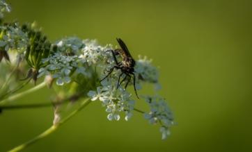 Insekt på hundkex