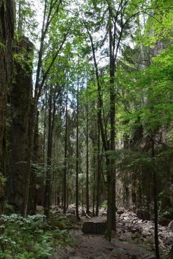 En skogsdunge