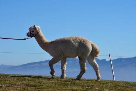 Alpacka Monte Baldo