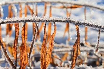 Vinter och höst