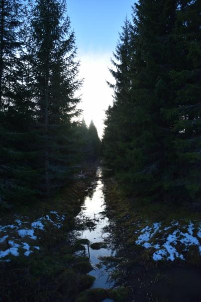 Ett dike i skogen