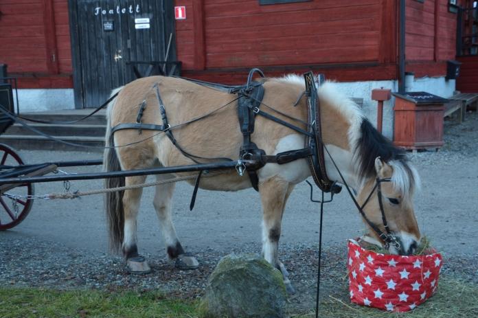 Den fina hästen på Hembygdsgården i Fagersta