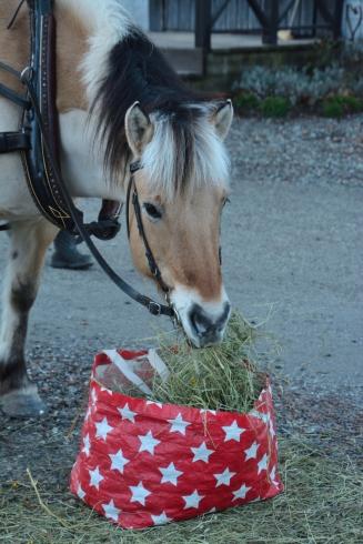 Hästen äter hö