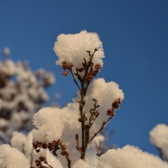 Blå himmel och snö