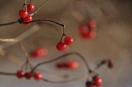 Röda bär