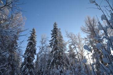 Snö på träden