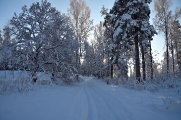 Snöig stig
