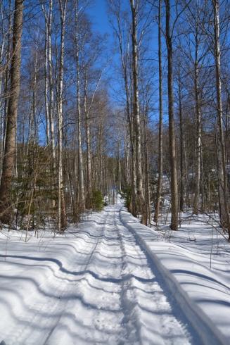 Skoterspår i skogen