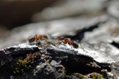 Myrmöte