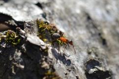 En myra i vårsolen