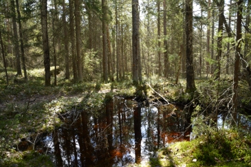 En mini-tjärn i skogen