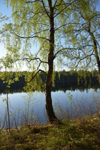 Kvällssol vid Lilla Älgsjön