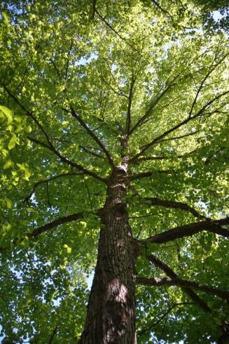 Lummigt träd