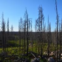 Hälleskogsbrännan, Skulpturparken och Högbyn