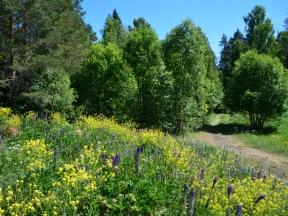 Blommande kulle