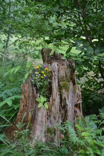 Blommor i en stubbe