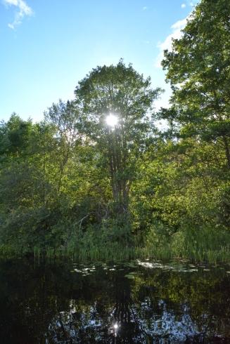 Solens strålar i trädet