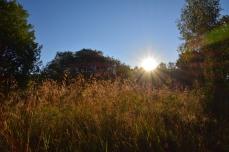 Soluppgång äver ängen