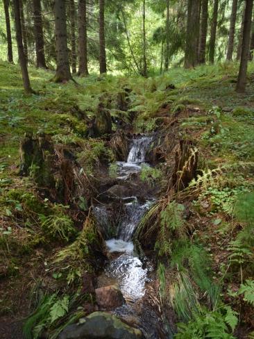 Porlande skogsbäck