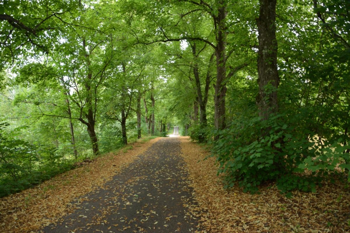Växtkraft och återhämtning i naturen