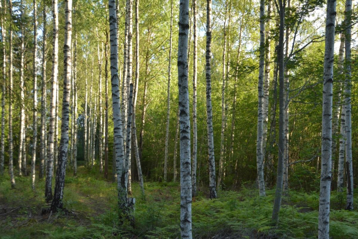 Vårgrön svampskog