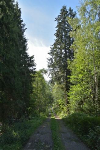 Lummig skogsväg
